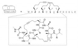 Orthogonal ring-closing alkyne and olefin metathesis for the synthesis of small GTPase-targeting bicyclic peptides